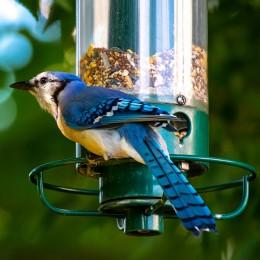 Karma pokarm dla ptaków zimujących na zimę 5 kg