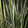 Duża sztuczna trawa w doniczce MISKANT chiński zielono-biały 100 cm
