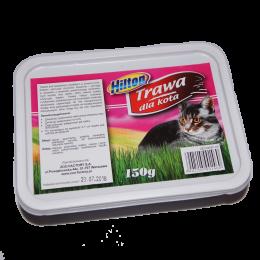 Trawa dla kota w pudełku HILTON nasiona do samodzielnego wysiewu
