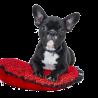 AmiWet szampon dla buldoga francuskiego / szampon dla psów buldog
