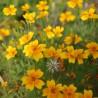Nasiona aksamitki wąskolistnej LULU 3g / aksamitki nasiona