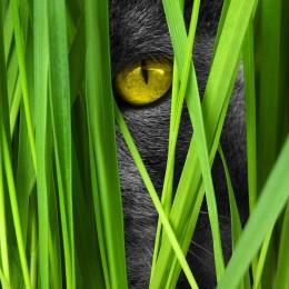 ZIELONY POKARM trawa dla kotów i innych zwierząt