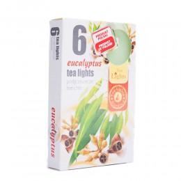 Podgrzewacze świeczki zapachowe TEA LIGHT 6 szt EUKALIPTUS