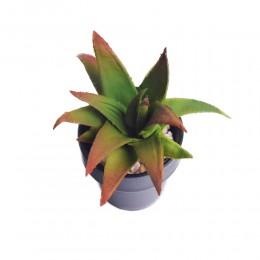 Kaktusy sukulenty SUKULENT AGAWA sztuczna roślina kwiat KAKTUS