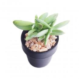 Kaktusy SUKULENT GRUBOSZ sztuczna roślina MINI KAKTUS w doniczce
