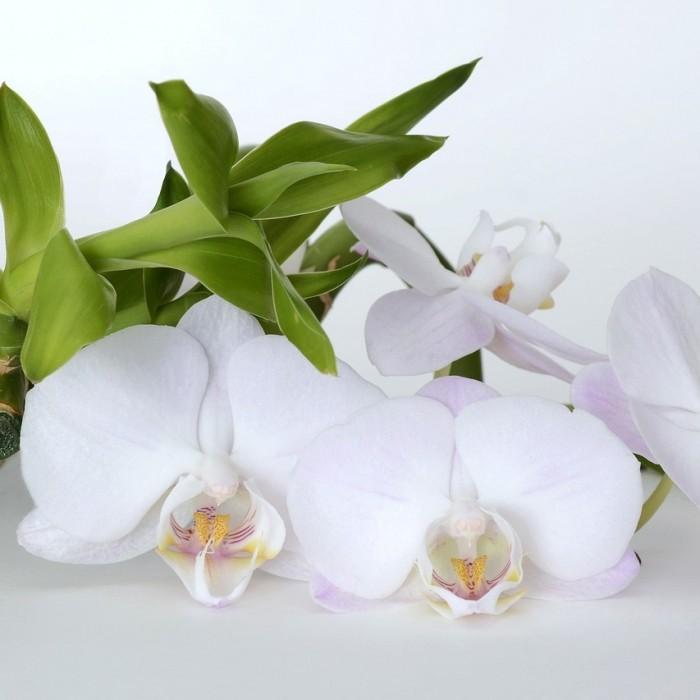 Naturalne aromaty olejek zapachowy JAŚMIN I ORCHIDEA 12ml