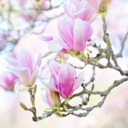 Naturalne aromaty olejek zapachowy MAGNOLIA 12ml